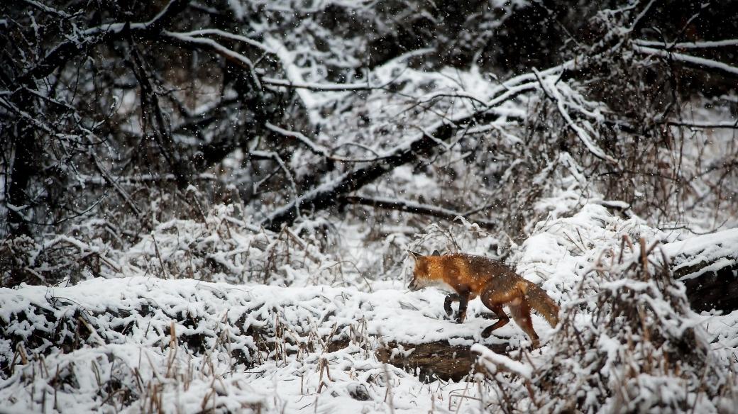 animal-cold-environment-247395.jpg
